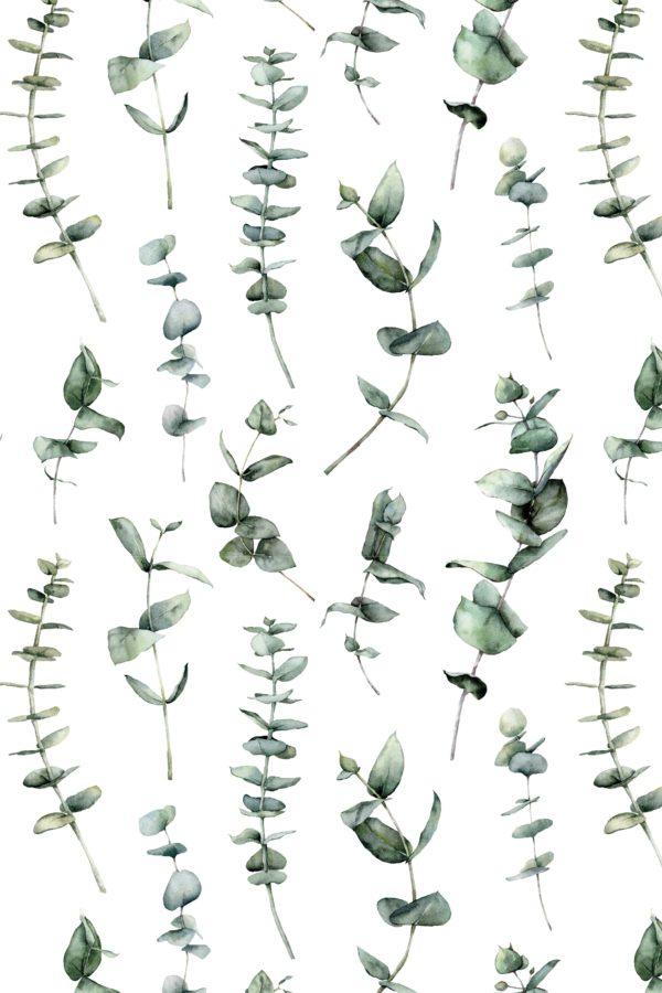 papier peint n°131 eucalyptus